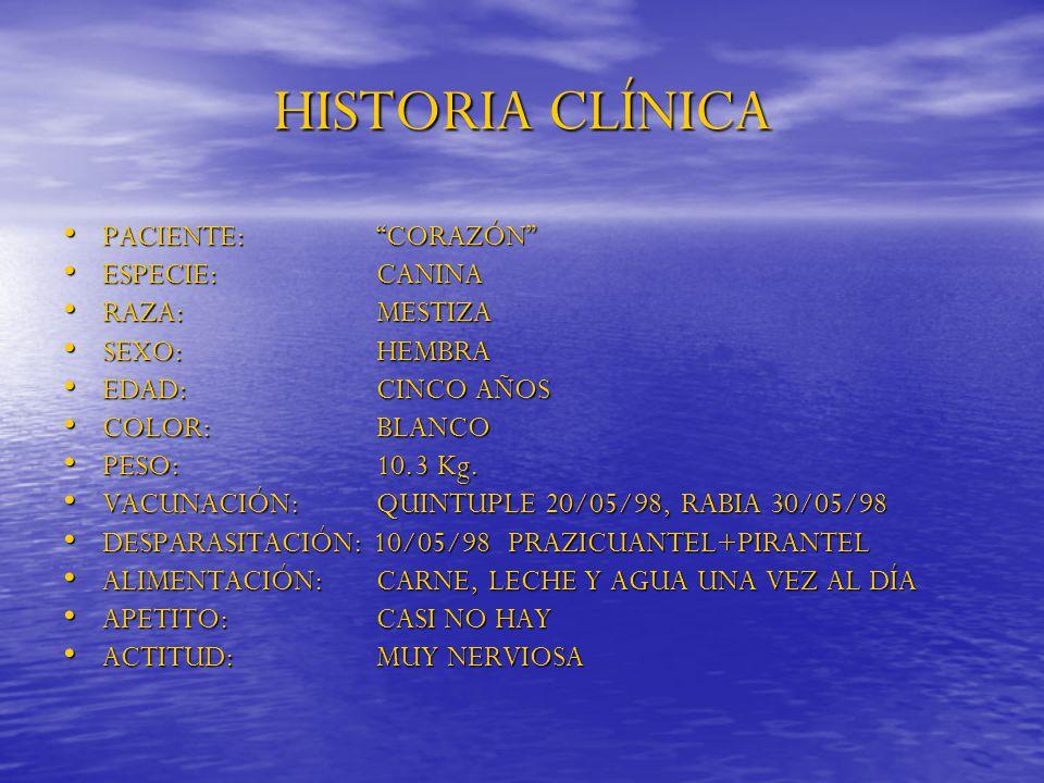 HISTORIA CLÍNICA PACIENTE: CORAZÓN ESPECIE: CANINA RAZA: MESTIZA