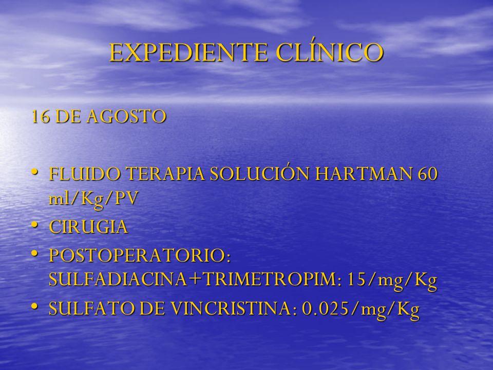 EXPEDIENTE CLÍNICO 16 DE AGOSTO