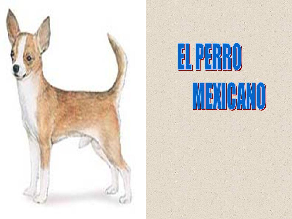 EL PERRO MEXICANO