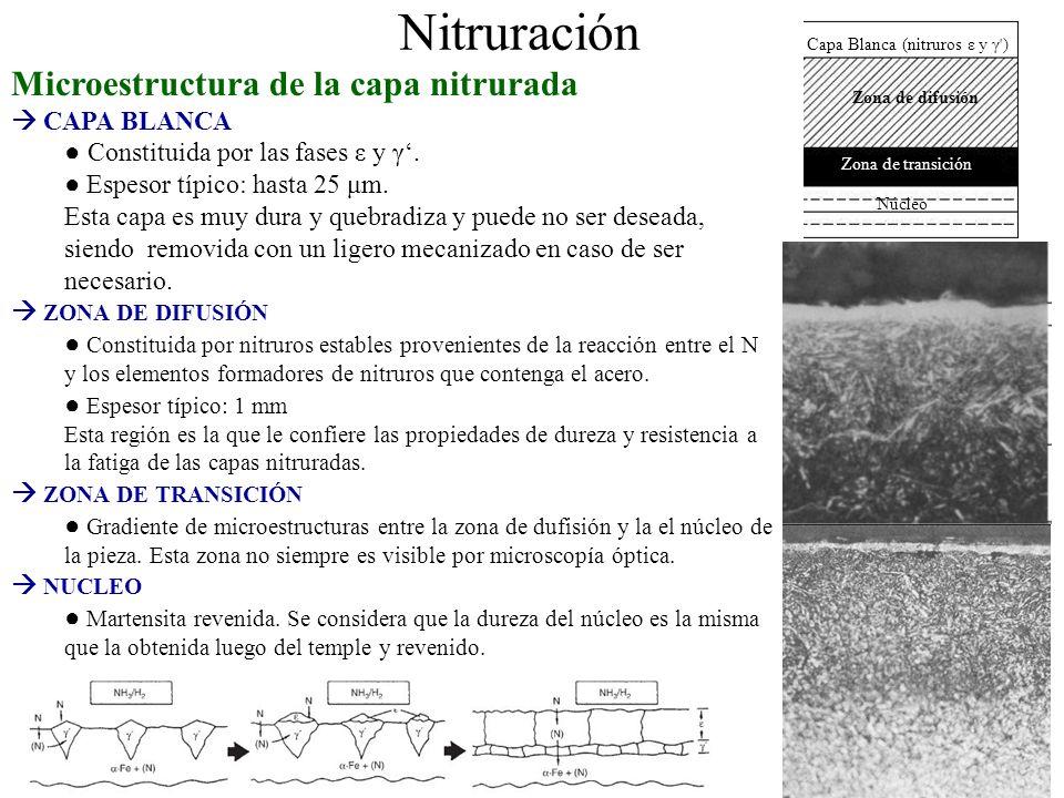 Nitruración Microestructura de la capa nitrurada  CAPA BLANCA
