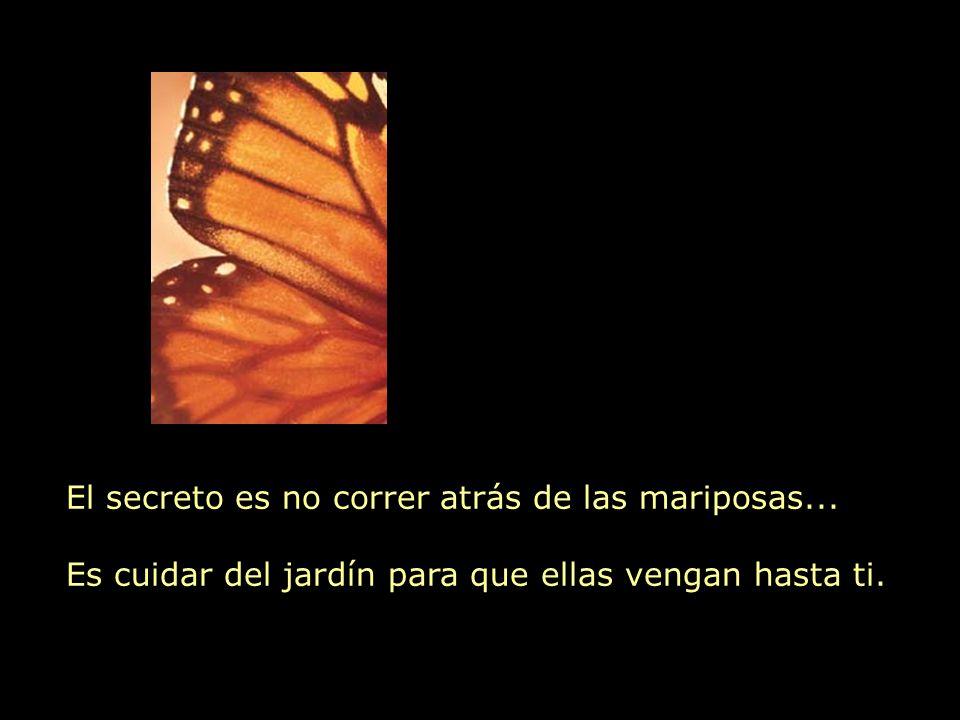 El secreto es no correr atrás de las mariposas...