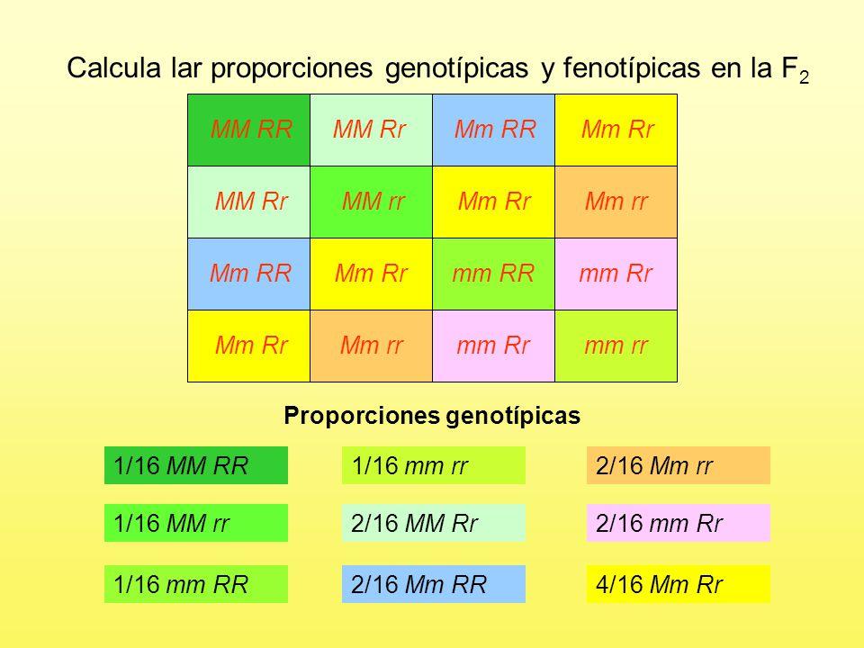Proporciones genotípicas