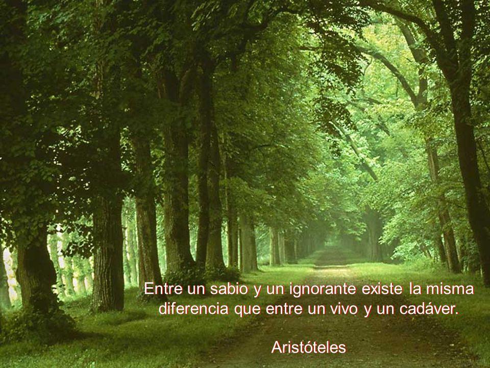 Entre un sabio y un ignorante existe la misma diferencia que entre un vivo y un cadáver. Aristóteles