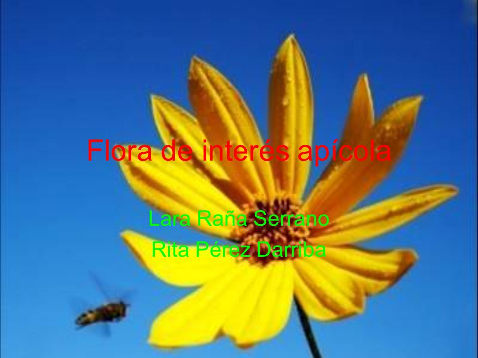 Flora de interés apícola