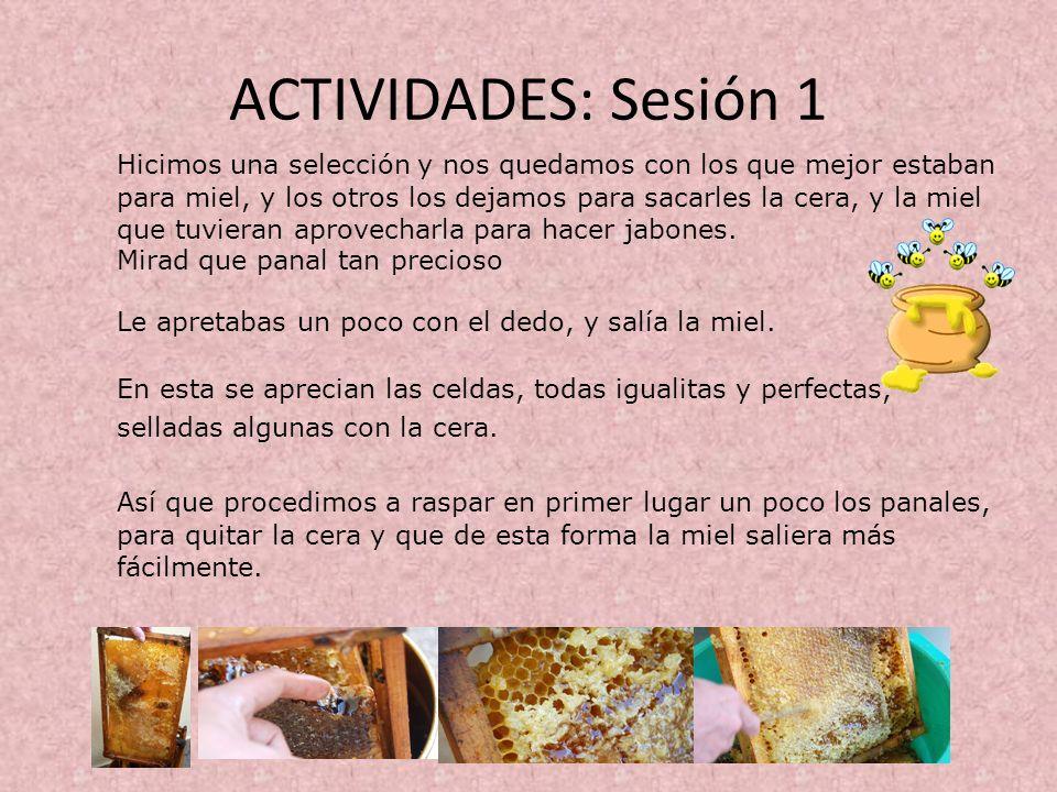ACTIVIDADES: Sesión 1