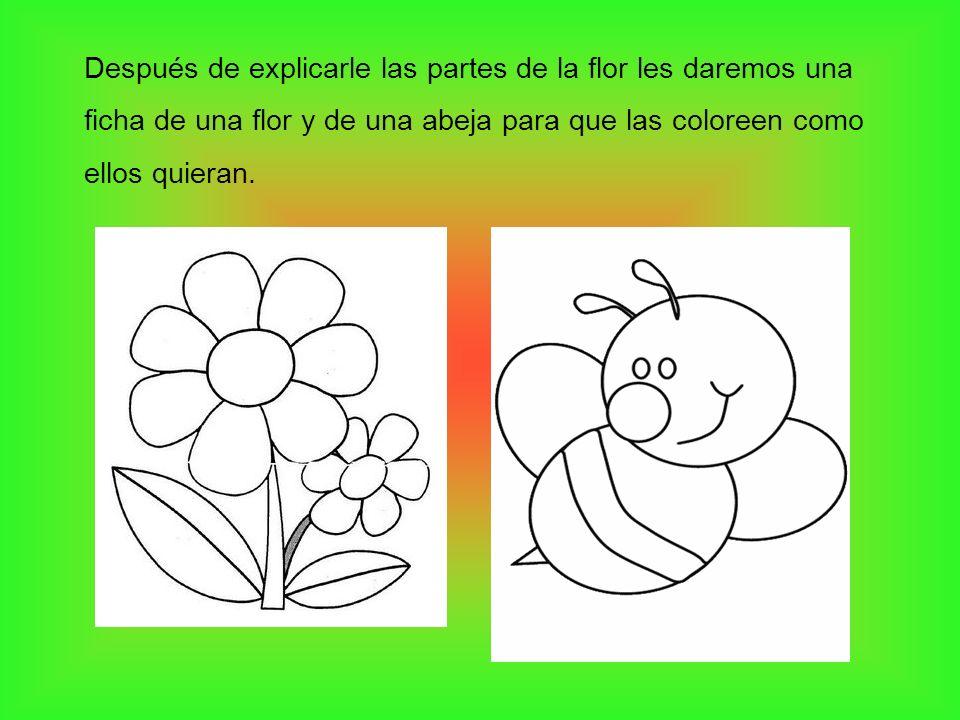Después de explicarle las partes de la flor les daremos una ficha de una flor y de una abeja para que las coloreen como ellos quieran.