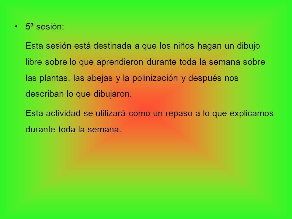 5ª sesión: