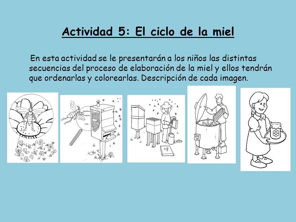 Actividad 5: El ciclo de la miel