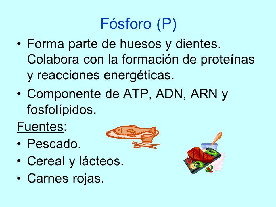 Fósforo (P)Forma parte de huesos y dientes. Colabora con la formación de proteínas y reacciones energéticas.