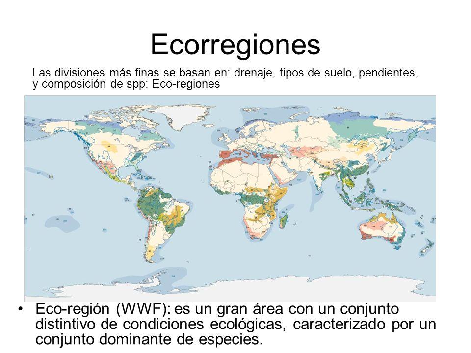 EcorregionesLas divisiones más finas se basan en: drenaje, tipos de suelo, pendientes, y composición de spp: Eco-regiones.