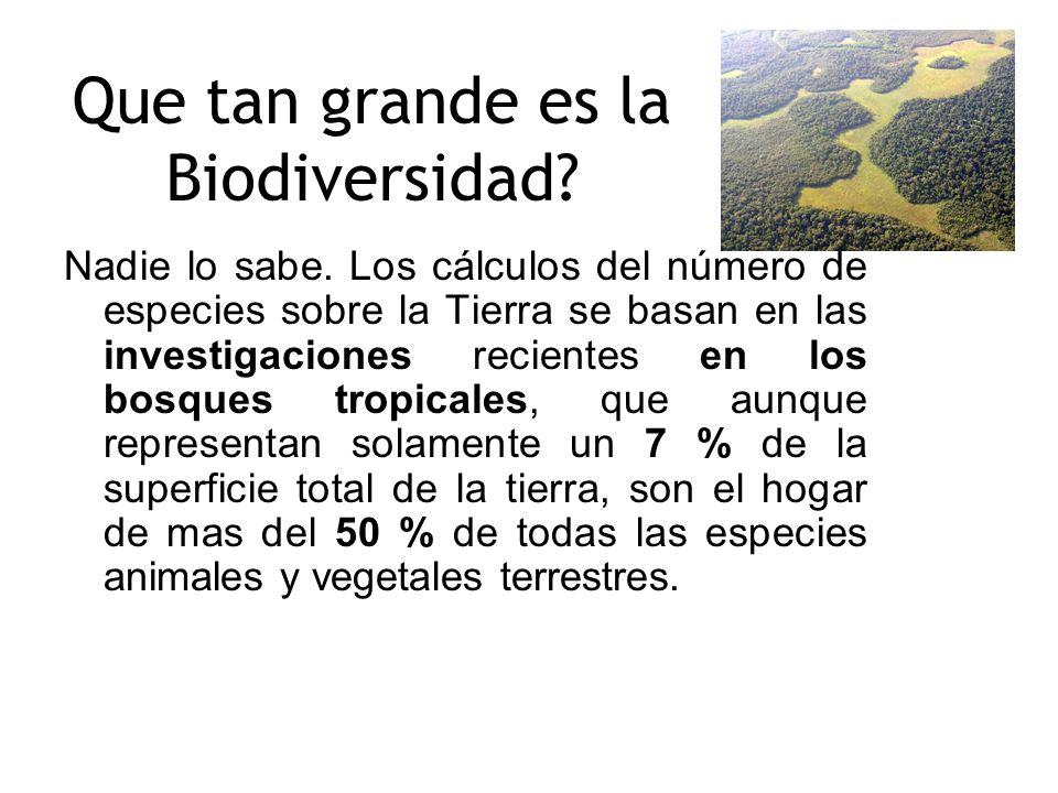 Que tan grande es la Biodiversidad