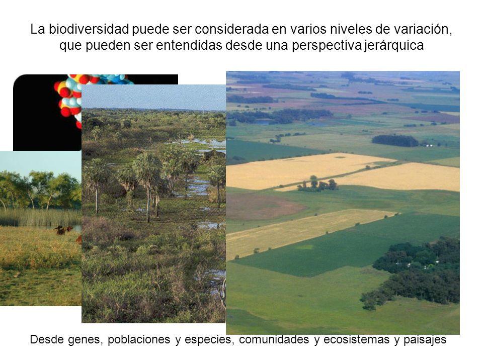 La biodiversidad puede ser considerada en varios niveles de variación, que pueden ser entendidas desde una perspectiva jerárquica