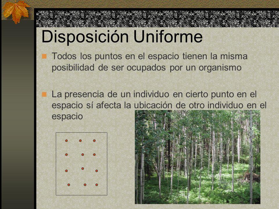 Disposición Uniforme Todos los puntos en el espacio tienen la misma posibilidad de ser ocupados por un organismo.
