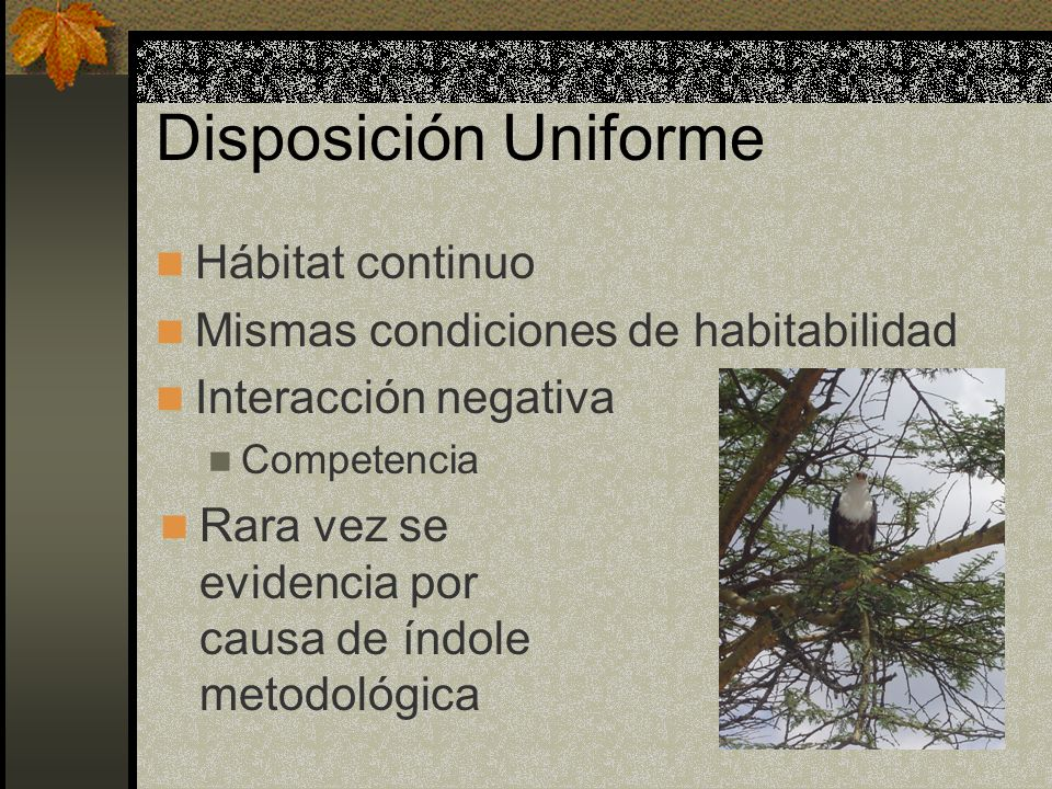 Disposición Uniforme Hábitat continuo