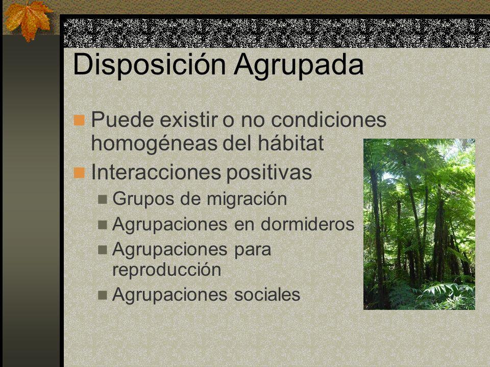Disposición Agrupada Puede existir o no condiciones homogéneas del hábitat. Interacciones positivas.