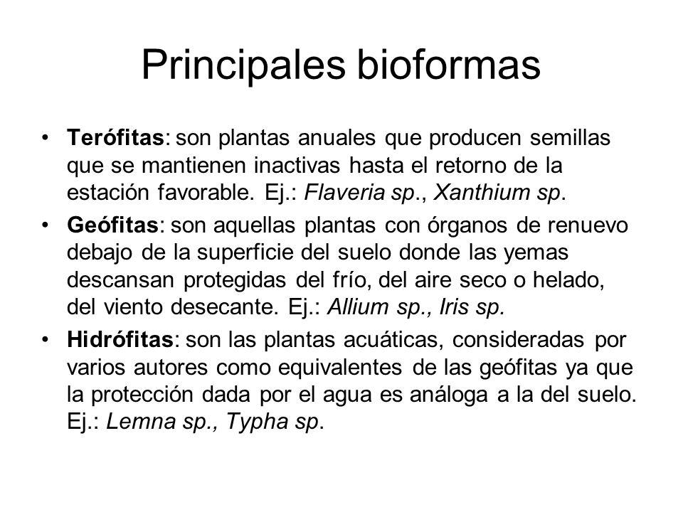 Principales bioformas