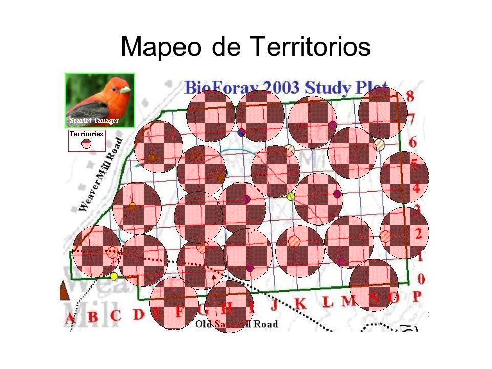 Mapeo de Territorios