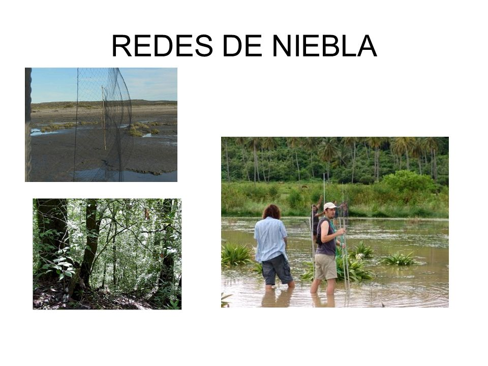 REDES DE NIEBLA