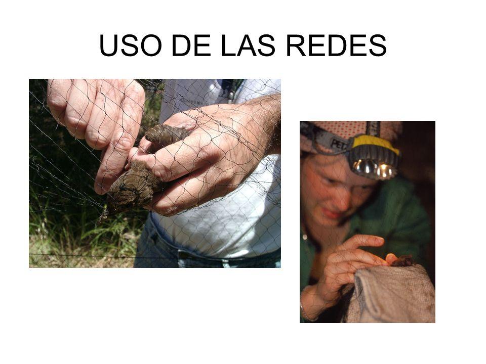 USO DE LAS REDES