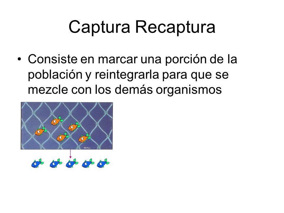 Captura Recaptura Consiste en marcar una porción de la población y reintegrarla para que se mezcle con los demás organismos.
