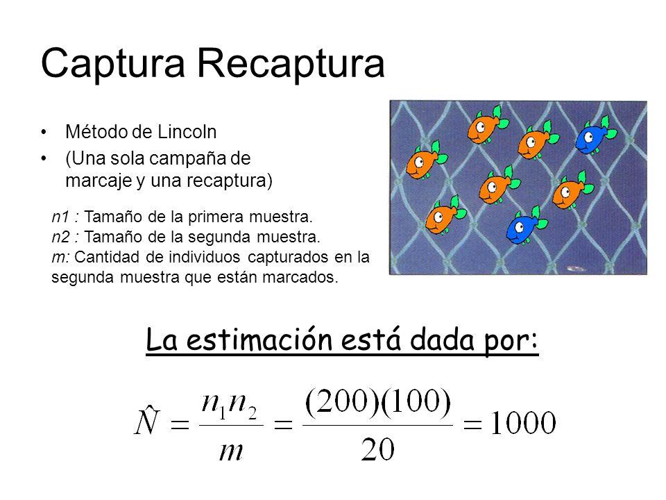 Captura Recaptura La estimación está dada por: Método de Lincoln