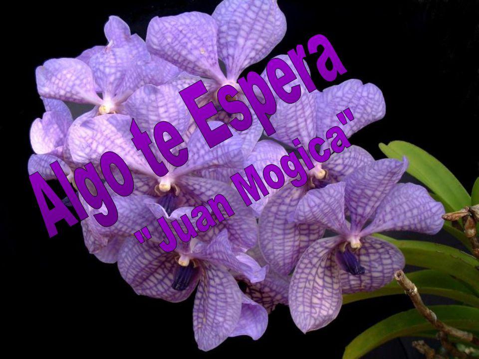 Algo te Espera Juan Mogica