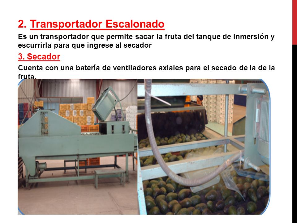 2. Transportador Escalonado