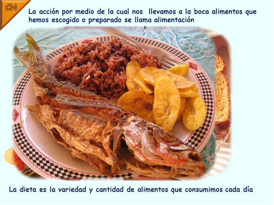 La acción por medio de la cual nos llevamos a la boca alimentos que hemos escogido o preparado se llama alimentación