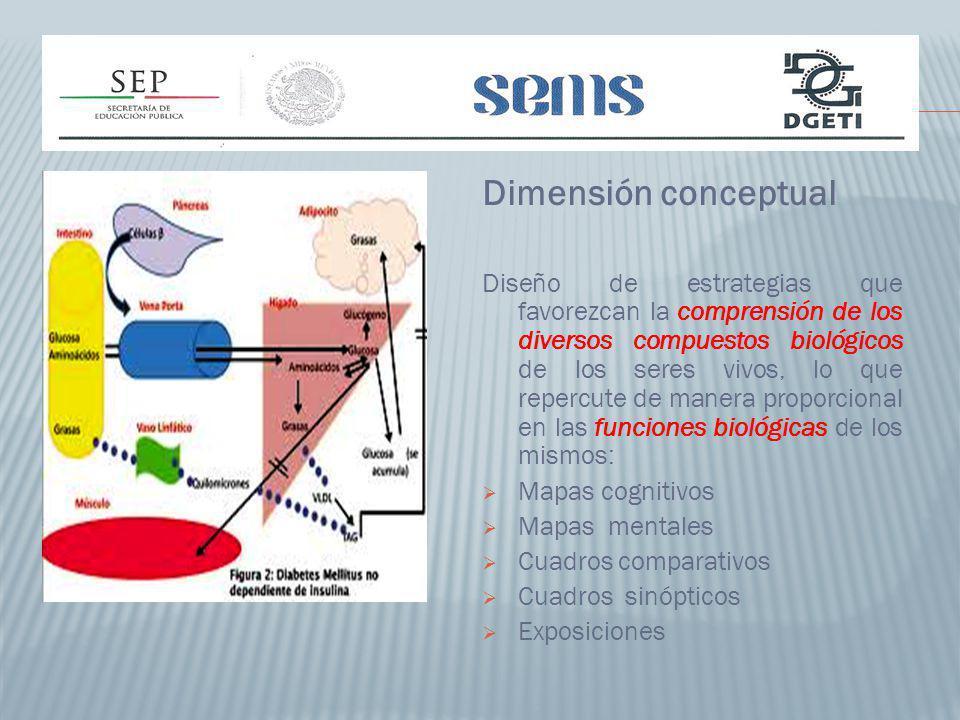 Dimensión conceptual
