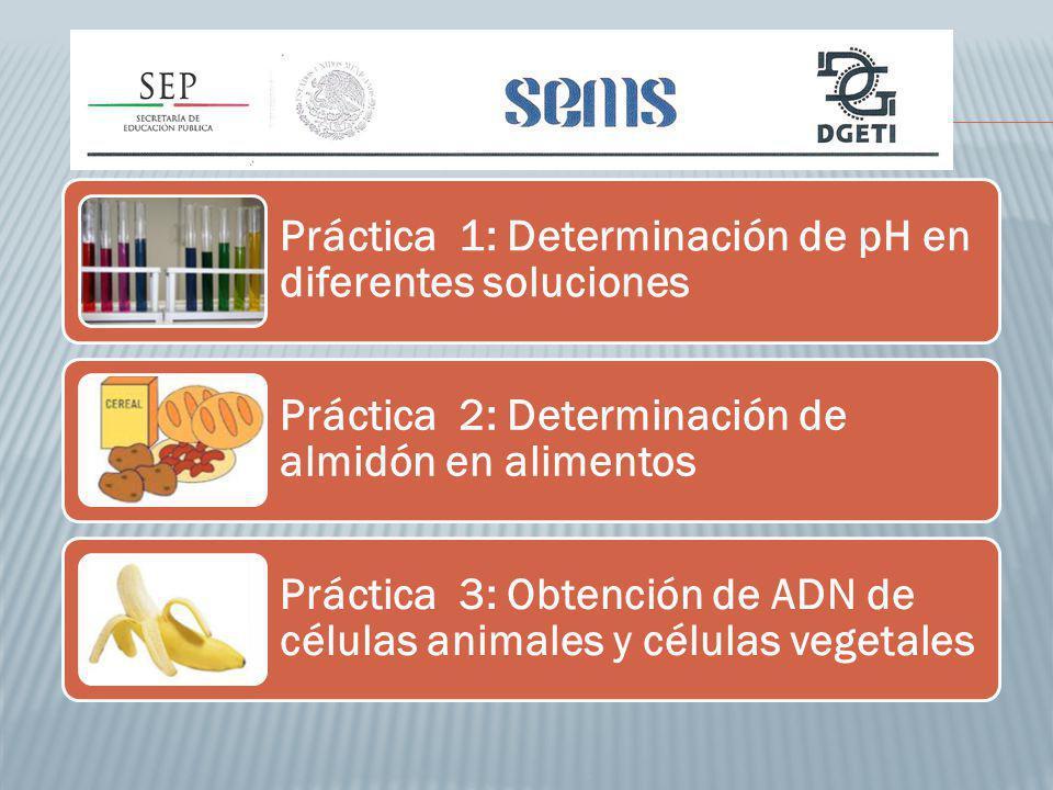 Práctica 1: Determinación de pH en diferentes soluciones