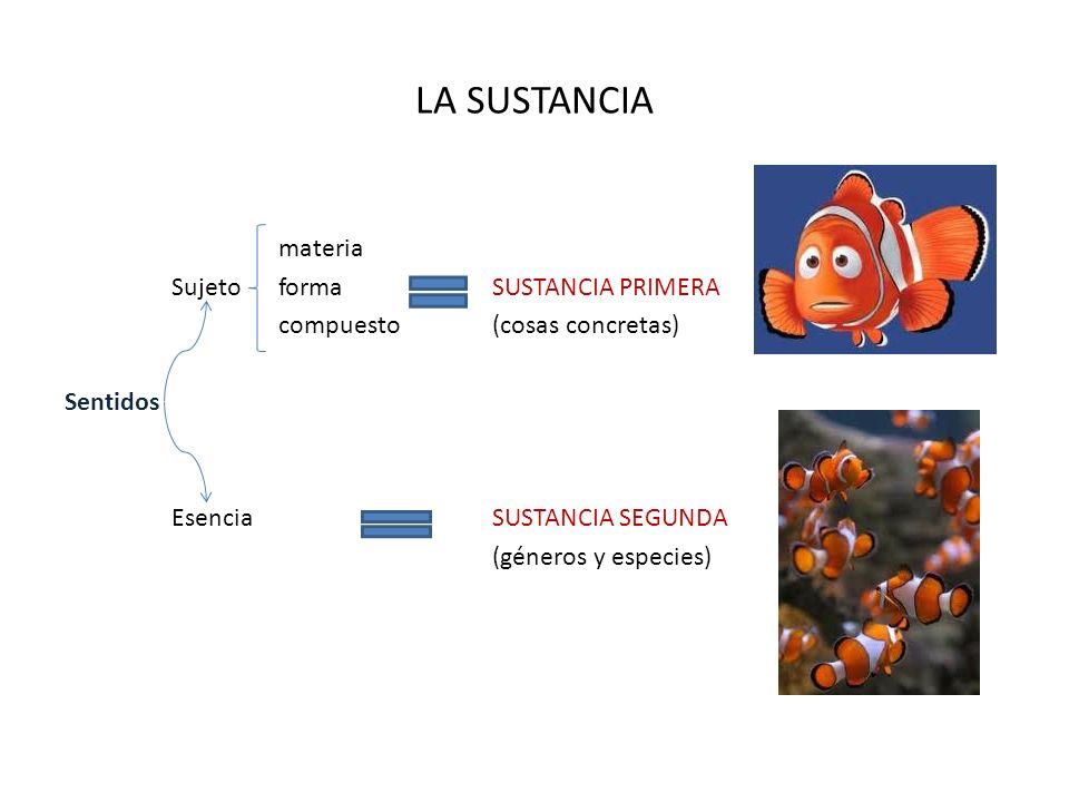 LA SUSTANCIA materia Sujeto forma SUSTANCIA PRIMERA compuesto (cosas concretas) Sentidos Esencia SUSTANCIA SEGUNDA (géneros y especies)