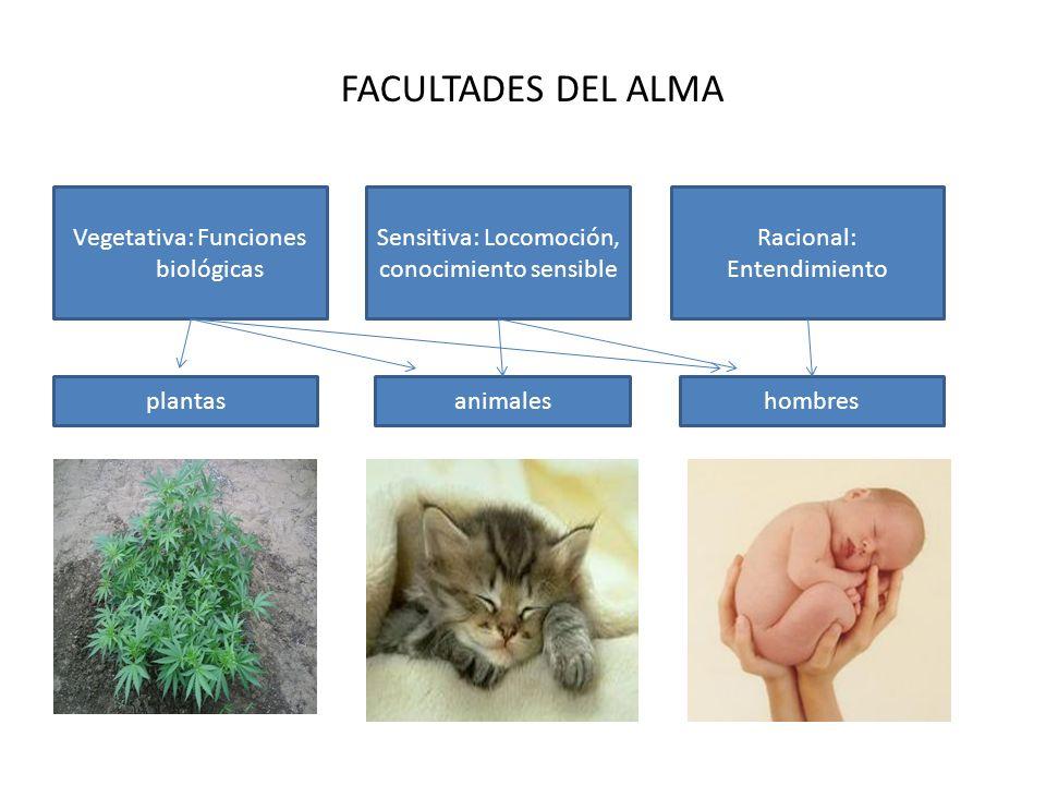 FACULTADES DEL ALMA Vegetativa: Funciones biológicas
