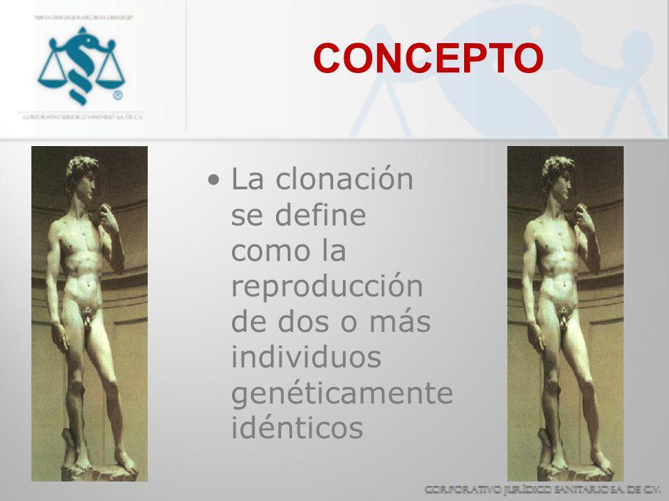 CONCEPTO La clonación se define como la reproducción de dos o más individuos genéticamente idénticos.