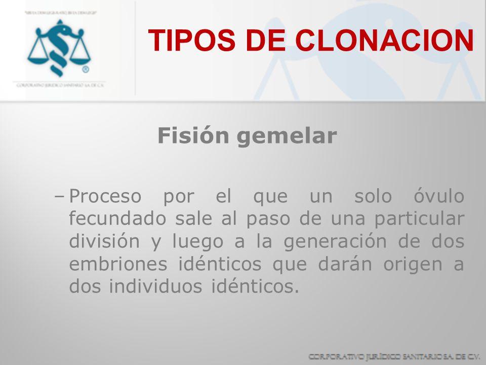 TIPOS DE CLONACION Fisión gemelar