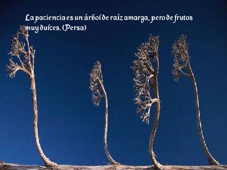 La paciencia es un árbol de raíz amarga, pero de frutos muy dulces