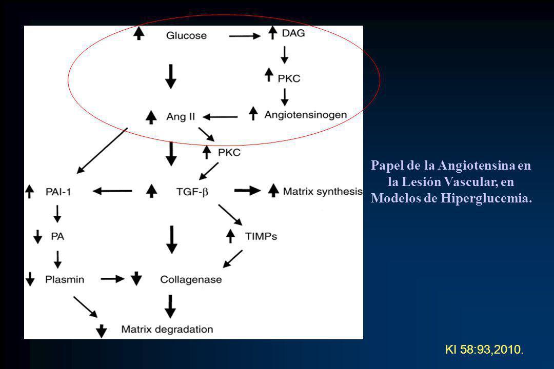 Papel de la Angiotensina en la Lesión Vascular, en Modelos de Hiperglucemia.