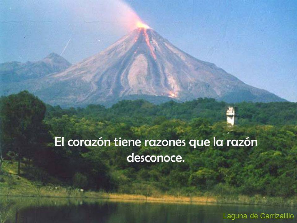 El corazón tiene razones que la razón desconoce.