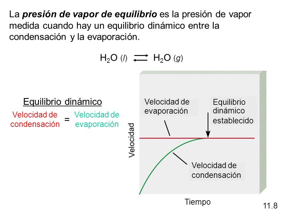 La presión de vapor de equilibrio es la presión de vapor medida cuando hay un equilibrio dinámico entre la condensación y la evaporación.