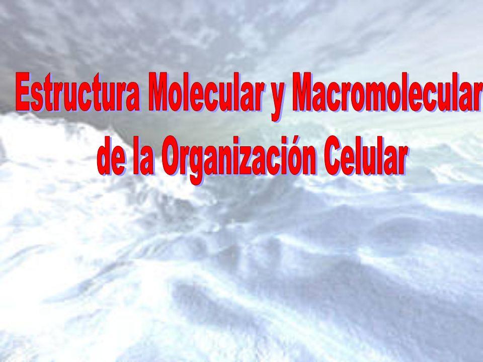 Estructura Molecular y Macromolecular de la Organización Celular