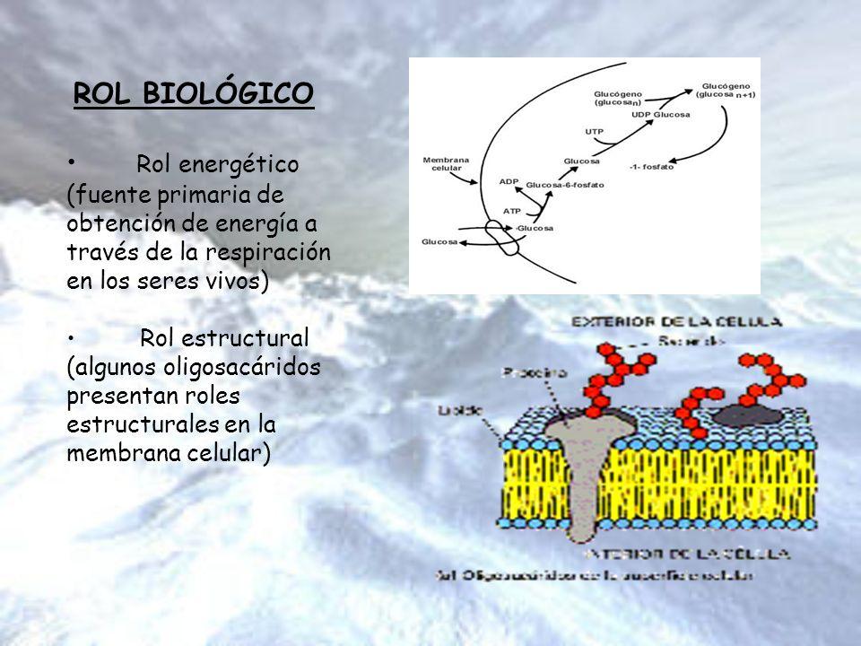 ROL BIOLÓGICO Rol energético (fuente primaria de obtención de energía a través de la respiración en los seres vivos)