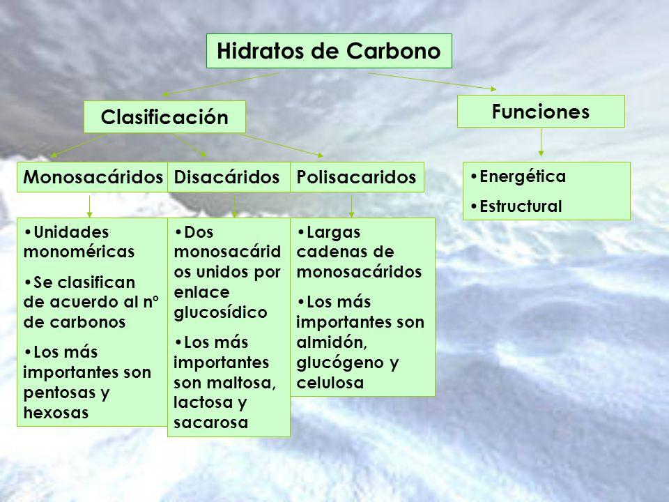 Hidratos de Carbono Funciones Clasificación Monosacáridos Disacáridos