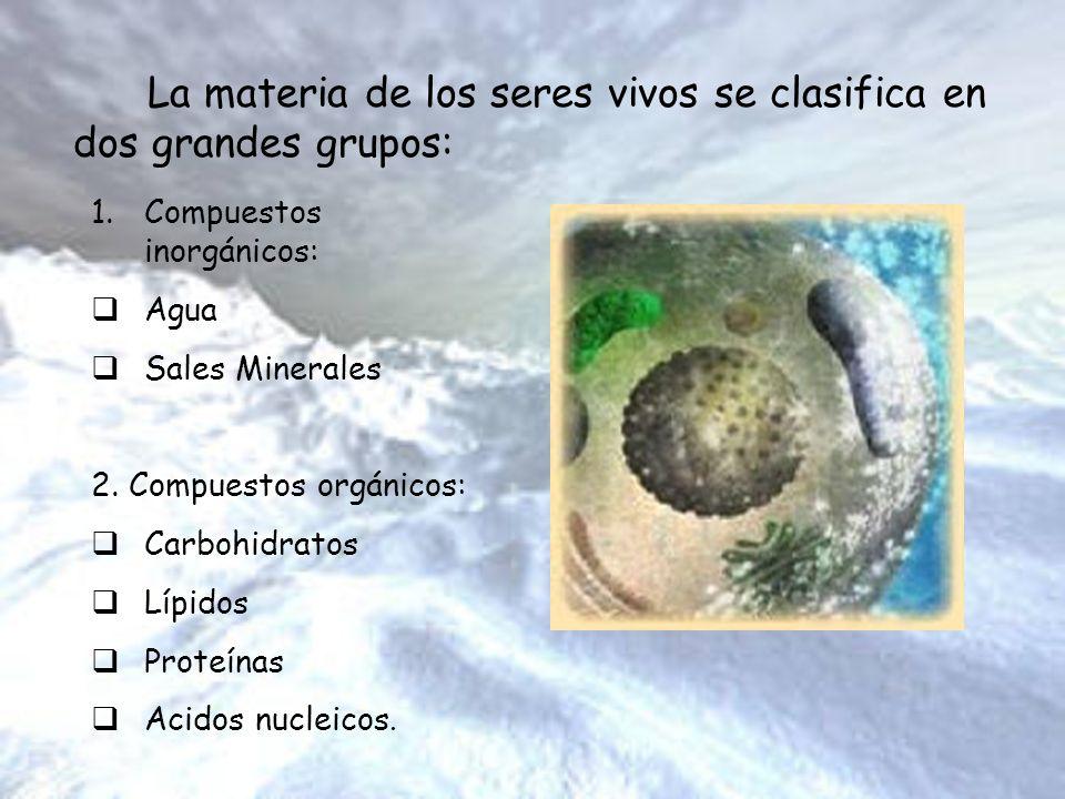 La materia de los seres vivos se clasifica en dos grandes grupos: