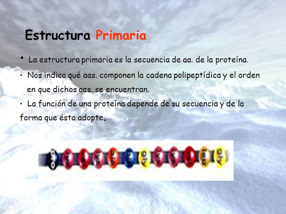 La estructura primaria es la secuencia de aa. de la proteína.