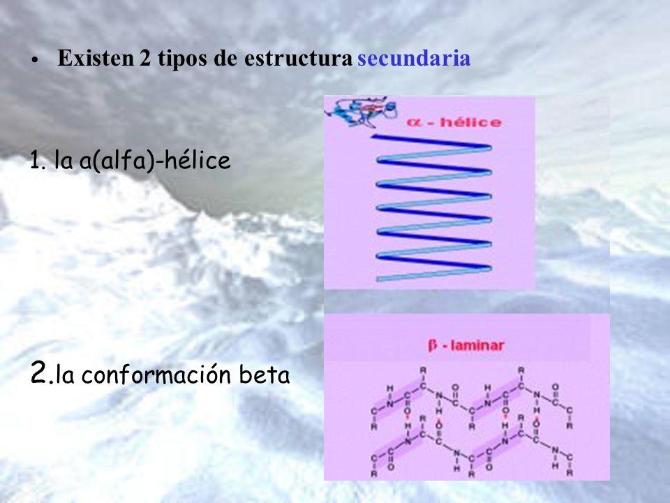 2.la conformación beta Existen 2 tipos de estructura secundaria