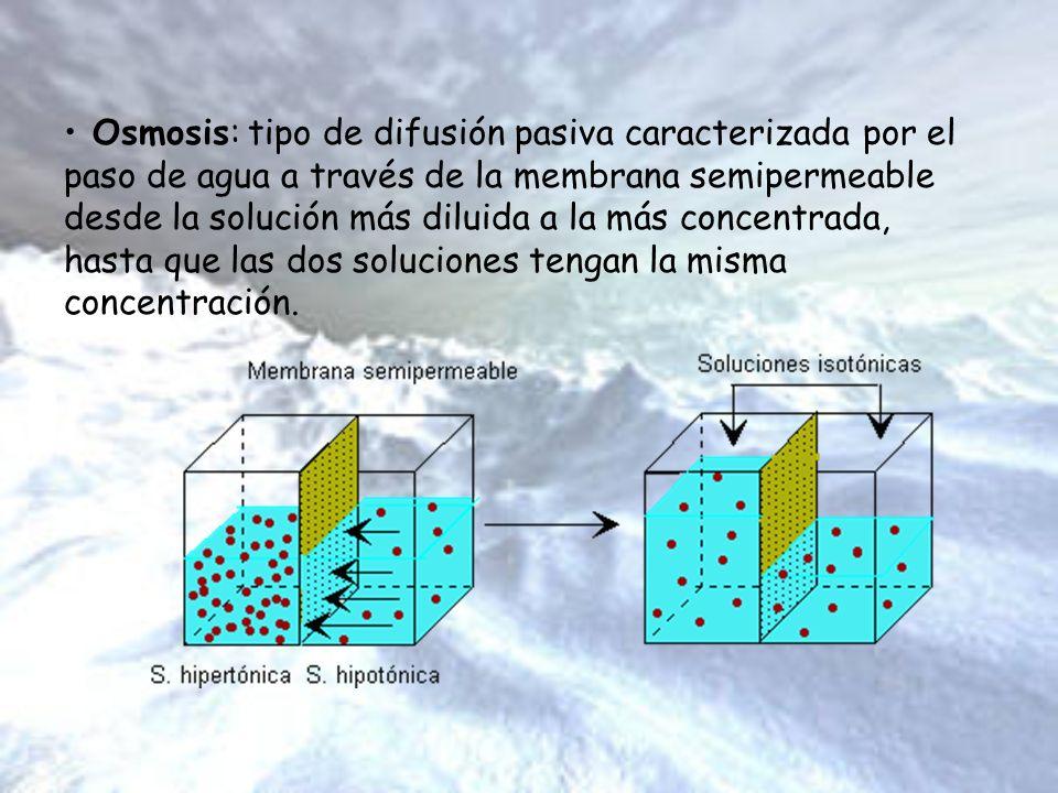 Osmosis: tipo de difusión pasiva caracterizada por el paso de agua a través de la membrana semipermeable desde la solución más diluida a la más concentrada, hasta que las dos soluciones tengan la misma concentración.