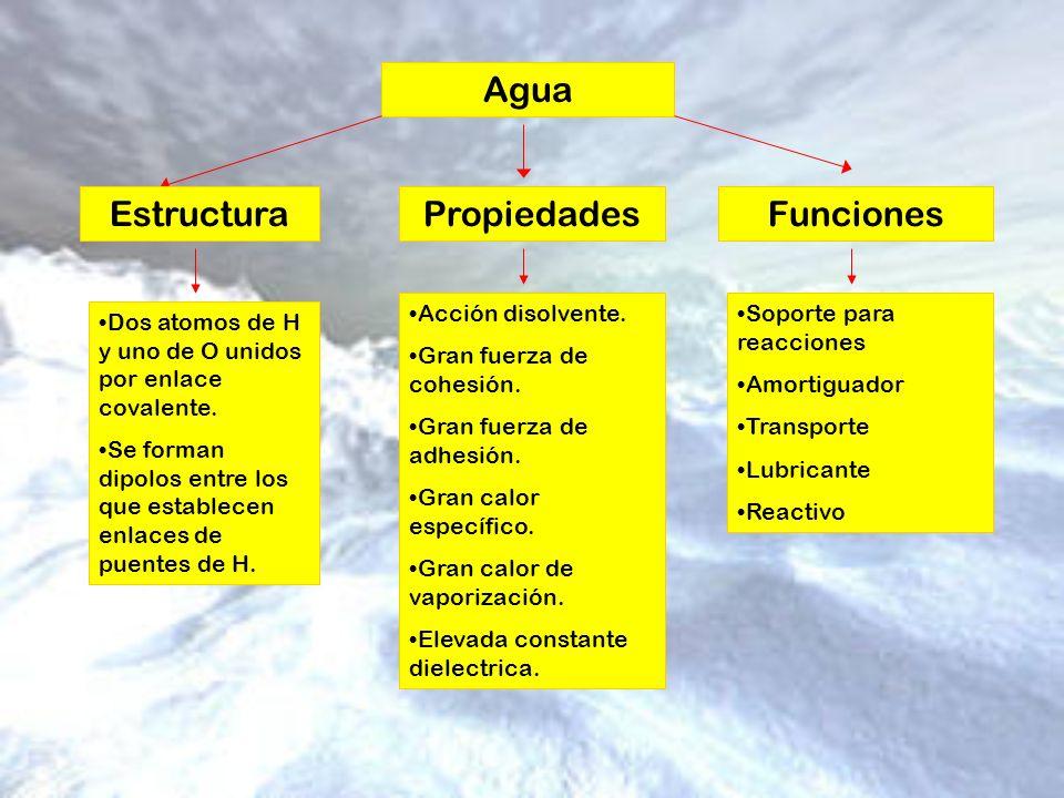 Agua Estructura Propiedades Funciones Acción disolvente.