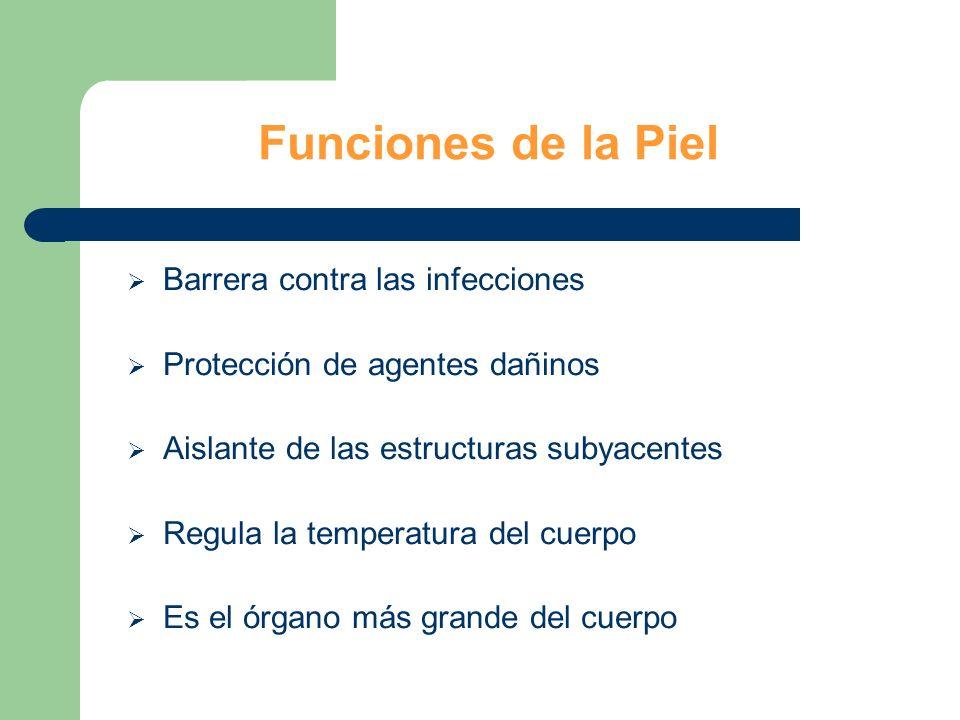 Funciones de la Piel Barrera contra las infecciones