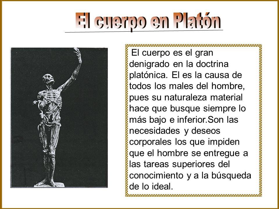 El cuerpo en Platón