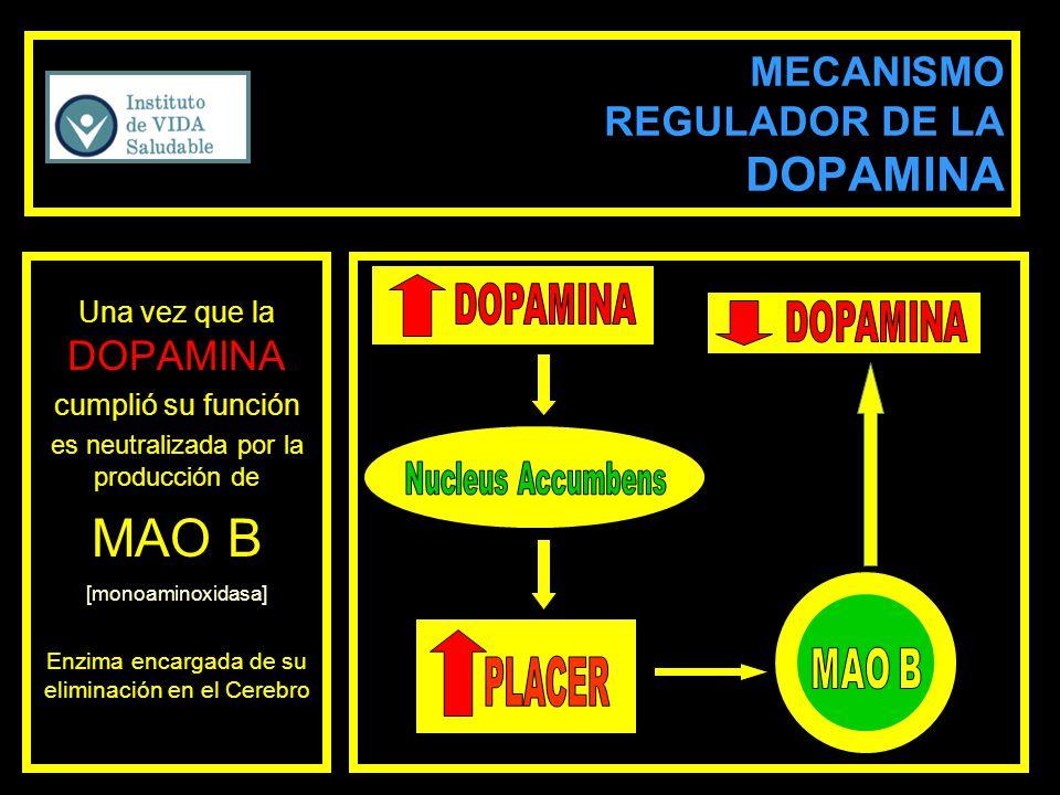 MECANISMO REGULADOR DE LA DOPAMINA