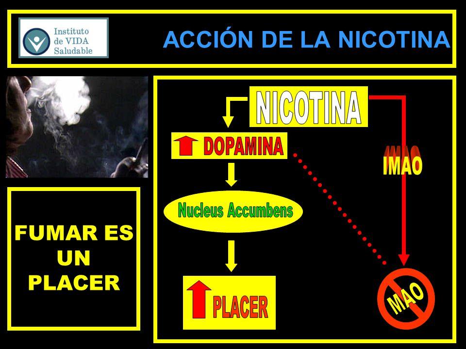 ACCIÓN DE LA NICOTINA FUMAR ES UN PLACER NICOTINA DOPAMINA IMAO MAO